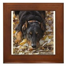 Beauceron Leaves Framed Tile