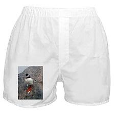 Puffin Sliding Boxer Shorts