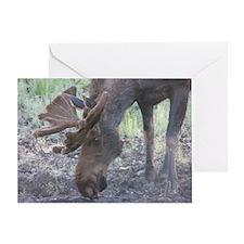 Bull Moose #05 Greeting Card