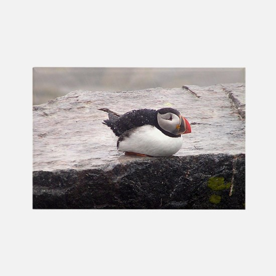 Puffin Sitting Rectangle Magnet