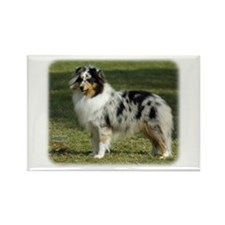 Shetland Sheepdog 9J089D-04 Rectangle Magnet