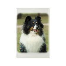 Shetland Sheepdog 9J089D-19 Rectangle Magnet