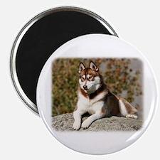 Siberian Husky 9Y773D-064 Magnet