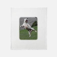Staffordshire Bull Terrier 9Y773D-333 Stadium Bla