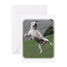 Staffordshire Bull Terrier 9Y773D-333 Greeting Car