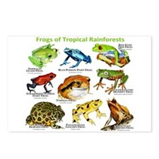 Frogs of the Tropical Rainforests Postcards (Packa