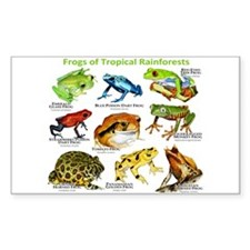 Frogs of the Tropical Rainforests Decal