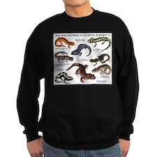 Salamanders of North America Sweatshirt