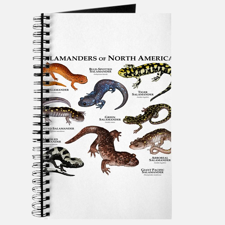 Amphibians Journal Amphibian Office Suppl...