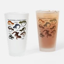 Salamanders of North America Drinking Glass