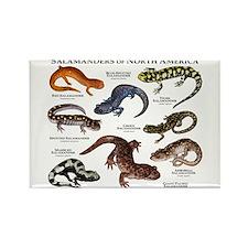 Salamanders of North America Rectangle Magnet