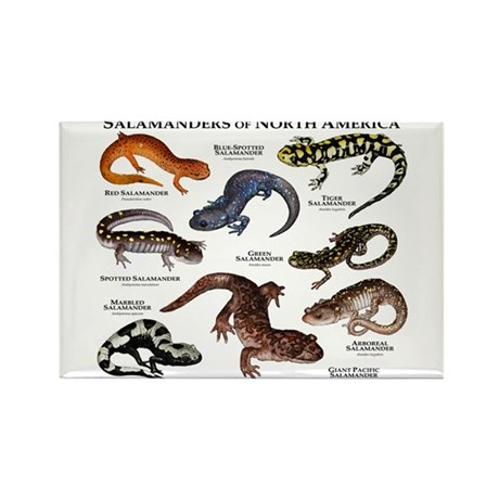 Salamanders of North America Rectangle Magnet