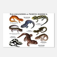 Salamanders of North America Postcards (Package of