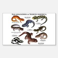 Salamanders of North America Decal