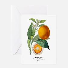 Histoire naturelle des orangers Tab 13 Greeting Ca