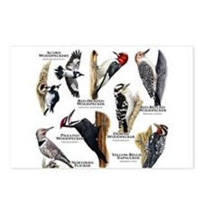 Woodpeckers of North America Postcards (Package of