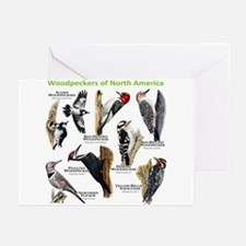 Woodpeckers of North America Greeting Cards (Pk of