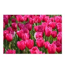 Pink Tulips Postcards (Package of 8)