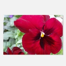 Perfect Red Pansy Postcards (Package of 8)