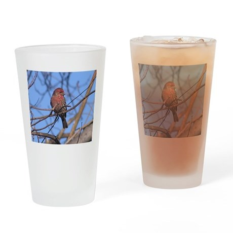 House Finch Drinking Glass