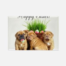 Easter Dogue de Bordeaux Rectangle Magnet (100 pac