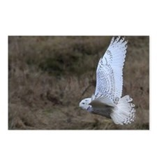 Snowy Owl flying Postcards (Package of 8)