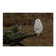 Snowy Owl Perched Postcards (Package of 8)