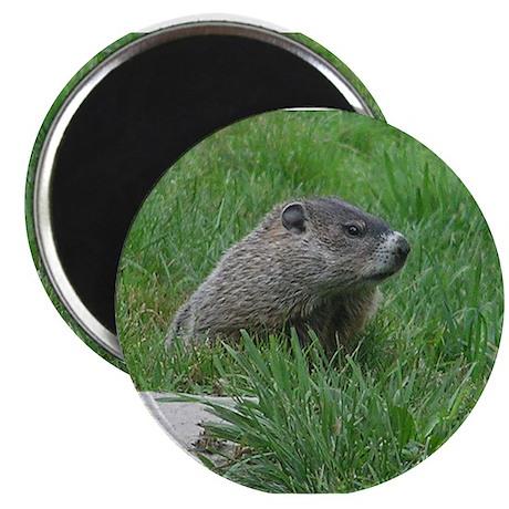 "Woodchuck (Ground Hog) 2.25"" Magnet (10 pack)"