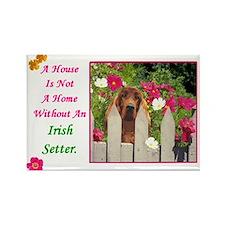 Cute Irish setter Rectangle Magnet (100 pack)
