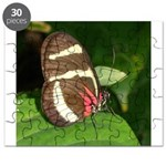 Butterfly pic Puzzle