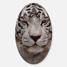 White Tiger 4 Decal