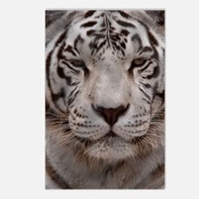 White Tiger 4 Postcards (Package of 8)
