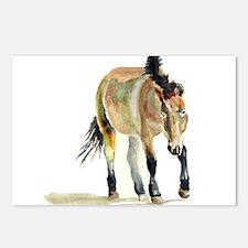 Sheepherding Sissie/Sheltie Postcards (Package of