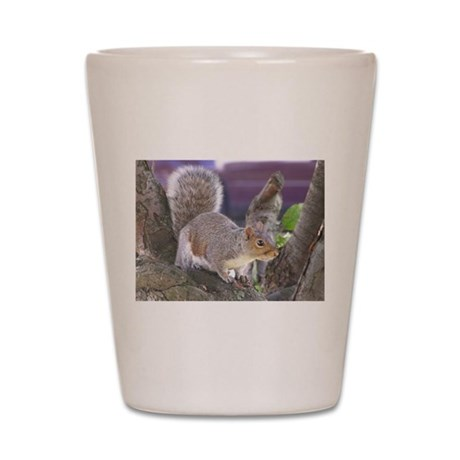 Gray Squirrel in Tree Shot Glass