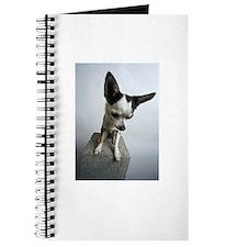 Baby Chihuahua Journal