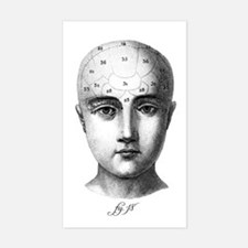 Phrenology Rectangle Decal