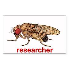 Drosophila Decal