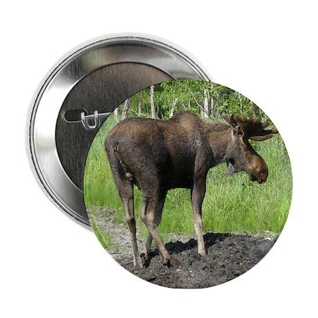 "Bull Moose #06 2.25"" Button"