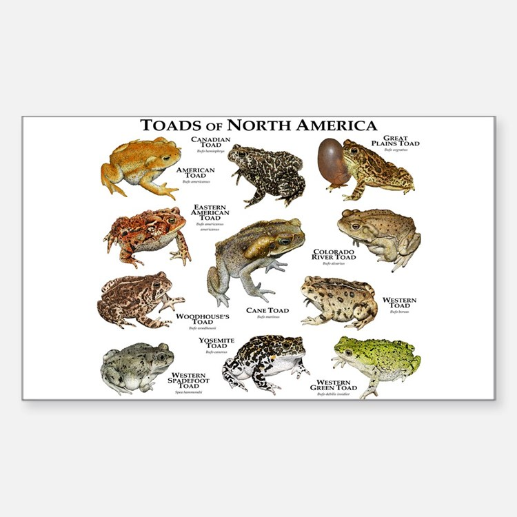 Toads of North America Decal