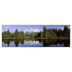 Wyoming, Grand Teton National Park, Trees along th Poster