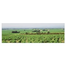 High angle view of vineyards, Chateanuf-de-Pape, P Poster