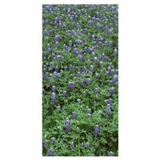 High angle view of plants, Bluebonnets, Austin, Te Poster