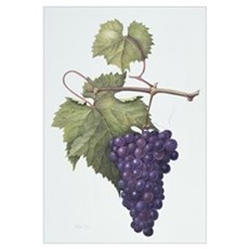 Grapes, 1994 (w/c on paper) Poster