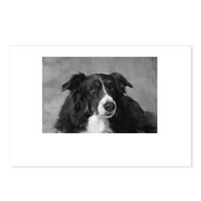 Border Collie Postcards (Package of 8)