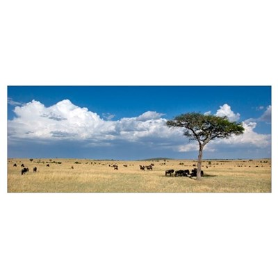 Lone tree and wildebeest on a field Poster