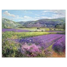 Lavender Fields in Old Provence (oil on canvas) Framed Print