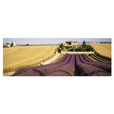 Field of lavender, Provence, France Canvas Art