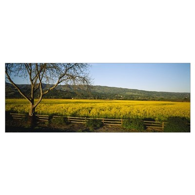Crops in a field, Napa Valley, California Poster