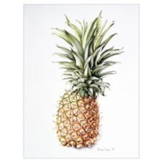 Pineapple, 1997 (w/c on paper) Poster