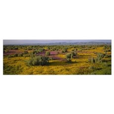 High angle view of wildflowers in a landscape, San Poster